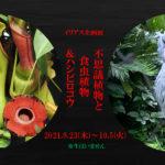 "<span class=""title"">イリアス企画展「不思議植物と食虫植物&ハシビロコウ」</span>"